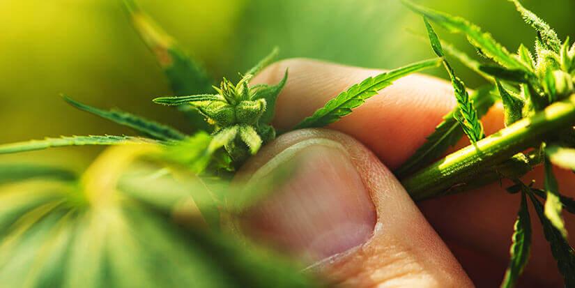 Cannabis für den Vaporizer richtig lagern